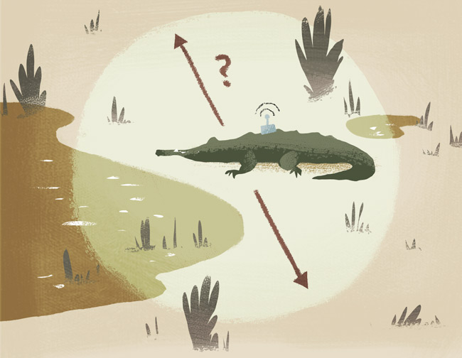 crocodile zone GPS
