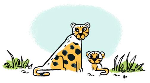 CheetahQ1