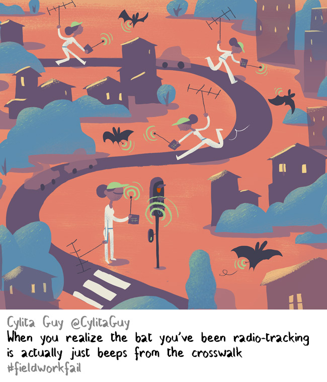 Bat radiotracking