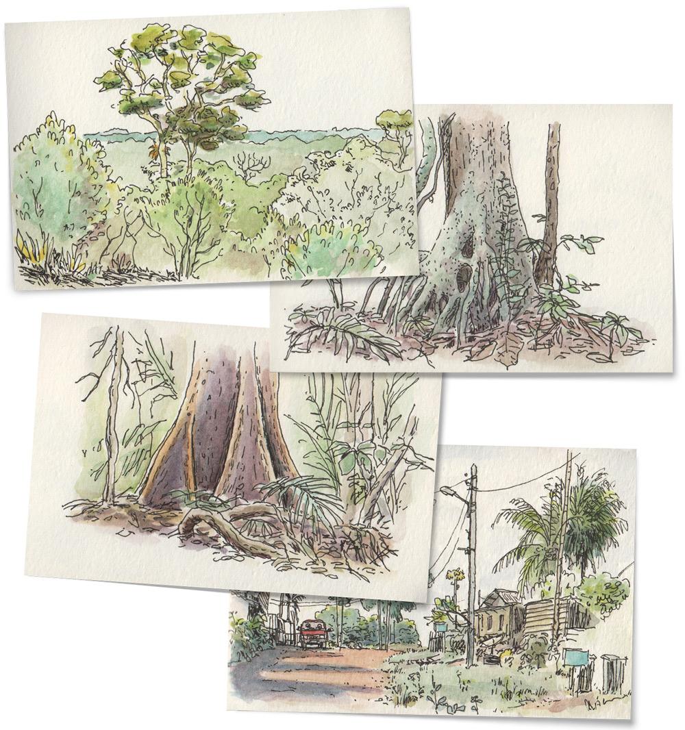 watercolor rainforest