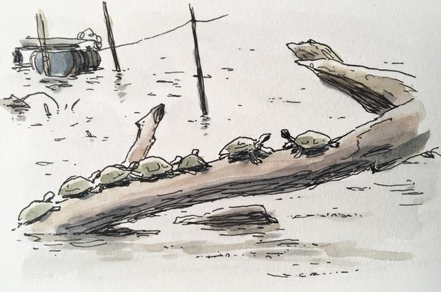 cashu-turtle